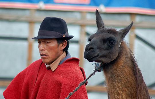 8 Highland man selling llama at the local market Ecuador